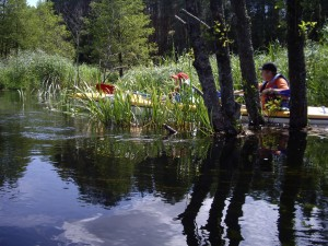 Plaukimas-Baidaremis-Lakajos-Upe