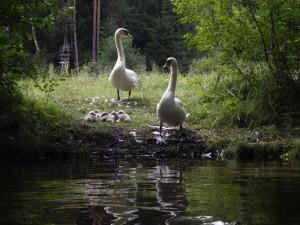 Vasarinis-Plaukimas-Šalčios-Upe
